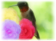 Ruby Throated Mixed Media Prints - Soft Touch 4 Print by Debra     Vatalaro