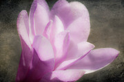 Decorating Mixed Media Metal Prints - Soft Violet Flower - Greensboro North Carolina Metal Print by Dan Carmichael