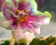 Linda  Smith - Soft Violet Monday