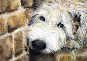 Earth Tone Painting Posters - Soft Wheaten Terrier Poster by Natasha Denger