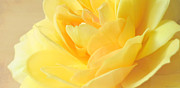 Deborah Smith - Soft Yellow Rose