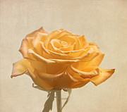 Sweetness Posters - Soft Yellow Rose Flower Poster by Kim Hojnacki