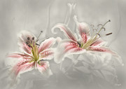 Hildingsson Prints - Soften lilies Print by Johnny Hildingsson