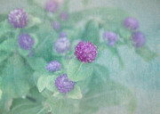 Textured Floral Prints - Softly Clover Print by Kim Hojnacki