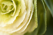 Softly Green Print by Anne Gilbert