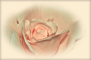 Softly Peach Print by Kaye Menner
