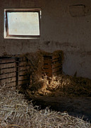 Rustic Barn Interior Art - Softly The Sun by Odd Jeppesen