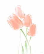 Light Green Posters - Softness of Peach Tulip Flowers Poster by Jennie Marie Schell