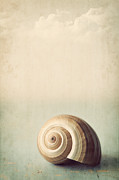 Sea Shell Digital Art Posters - Sojourn Poster by Amy Weiss