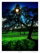 Oaks Framed Prints - Solar-Oak Eclipse Framed Print by Lar Matre