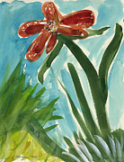 More Ideas Prints - Solitaire Red Star Flower in my Garden.   Print by Cathy Peterson