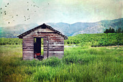Lake Chelan Prints - Solitary cabin Print by Sylvia Cook