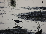 Dunlin Framed Prints - Solitary Dunlin Sandpiper Sillhouette Abstract - Calidris alpina Framed Print by JB Ronan