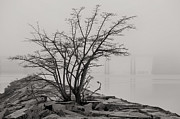 Foggy Day Art - Solitary  by JC Findley
