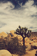 Joshua Tree National Park Framed Prints - Solitary Man Framed Print by Laurie Search