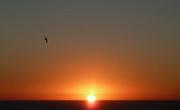 Valerie Anne Kelly - Solitary seagull