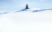 Winter Snow Landscape Posters - Solitary Poster by Theresa Tahara