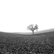 Coolness Photo Prints - Solitary tree in winter. Auvergne. France Print by Bernard Jaubert