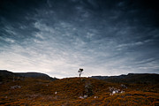 Cradle-mountain Framed Prints - Solitary tree Framed Print by Matteo Colombo