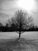 Lisa Jones - Solitary Wintry Tree