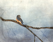 Bluebird Metal Prints - Solitude Metal Print by Jai Johnson