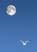 Sea Moon Full Moon Photo Prints - Solitude Print by Michael Peychich