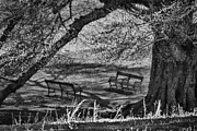 Teresa Jacobs Metal Prints - Solitude Metal Print by Teresa Jacobs