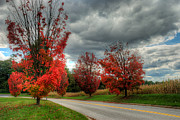 Mark Dodd - Some fall Colors