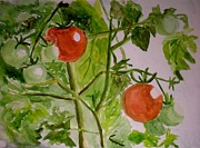 Mats Eriksson - Some tomatoes