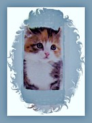 Cat Prints Framed Prints - Somebody Love Me Framed Print by Marsha Heiken