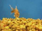 Donna Blackhall - Something Fishy