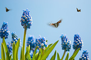 Hyacinth Photos - Something in the air by John Edwards