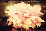 Trina  Ansel - Something to Be Thankful...