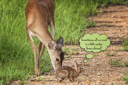 White-tail Deer Posters - Sometimes all we need is a little nudge from a friend Poster by Bonnie Barry