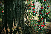 Flowering Trees Prints - Sometimes Life is Sweet Print by Laurie Search