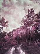 Birch Tree Metal Prints - Sometimes My World Turns Pink Metal Print by Priska Wettstein