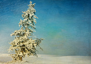 Fir Trees Prints - SomeWhere Print by Reflective Moments  Photography and Digital Art Images