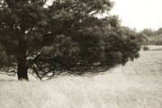 Branches Photos - Somewhere to Dream by Amy Weiss