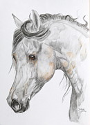 Horse Drawings Framed Prints - Son of the Wind Framed Print by Janina  Suuronen