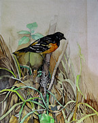 Alfred Ng - song bird from my youth