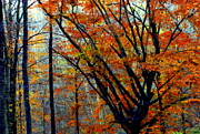 Smokey Mountains Posters - SONG of AUTUMN Poster by Karen Wiles