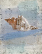 Sea Shell Prints - Songs of the Sea Print by Betty LaRue