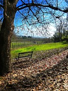 Wine Barrel Photo Originals - Sonoma Serenity  by Denny Brewer