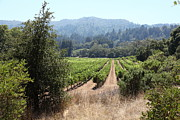 Pastoral Vineyard Photo Prints - Sonoma Vineyards In The Sonoma California Wine Country 5D24516 Print by Wingsdomain Art and Photography