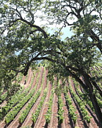 Pastoral Vineyard Photo Prints - Sonoma Vineyards In The Sonoma California Wine Country 5D24619 vertical Print by Wingsdomain Art and Photography