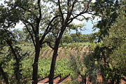 Chateau Photos - Sonoma Vineyards In The Sonoma California Wine Country 5D24622 by Wingsdomain Art and Photography