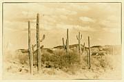 Arne Hansen - Sonoran Desert