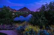 Sonoran Desert Prints - Sonoran Desert at Dusk Print by Scott McGuire