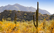 American West Digital Art Prints - Sonoran Desert Beauty Print by Betty LaRue