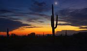 Saija  Lehtonen - Sonoran Desert By The Light of the Moon